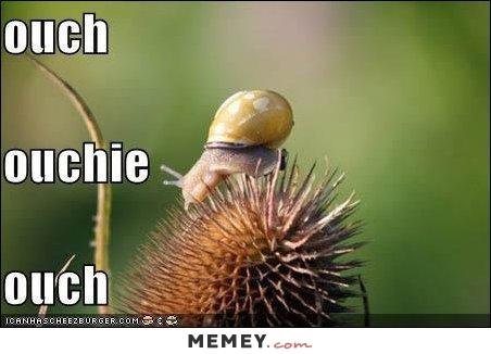 funny-snail-pain