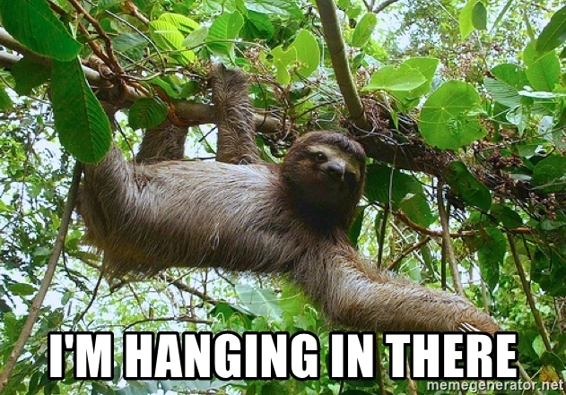 im-hanging-in-there